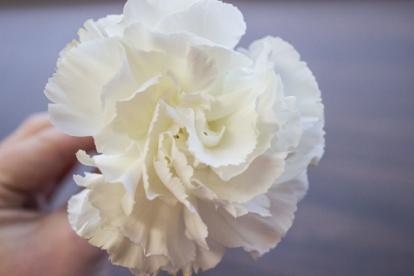 Flower_1forweb
