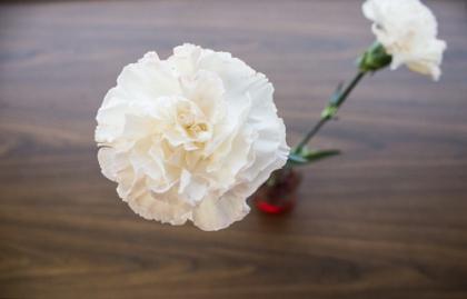 Flower_4forweb