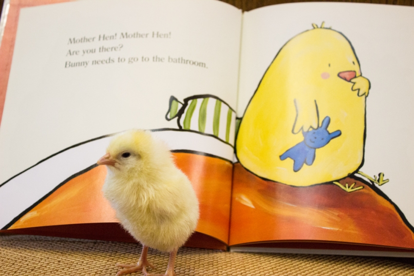Chick_1