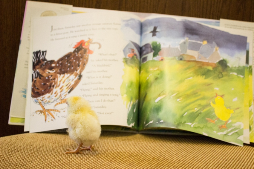 Chick_5