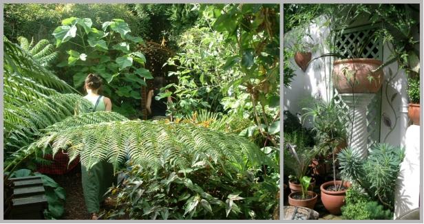 Amanda Hall - garden collage