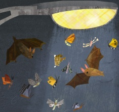 bats-crop