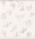moths-sketch