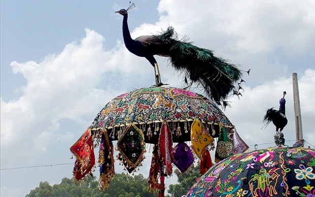 Tarnetar Mela Umbrella