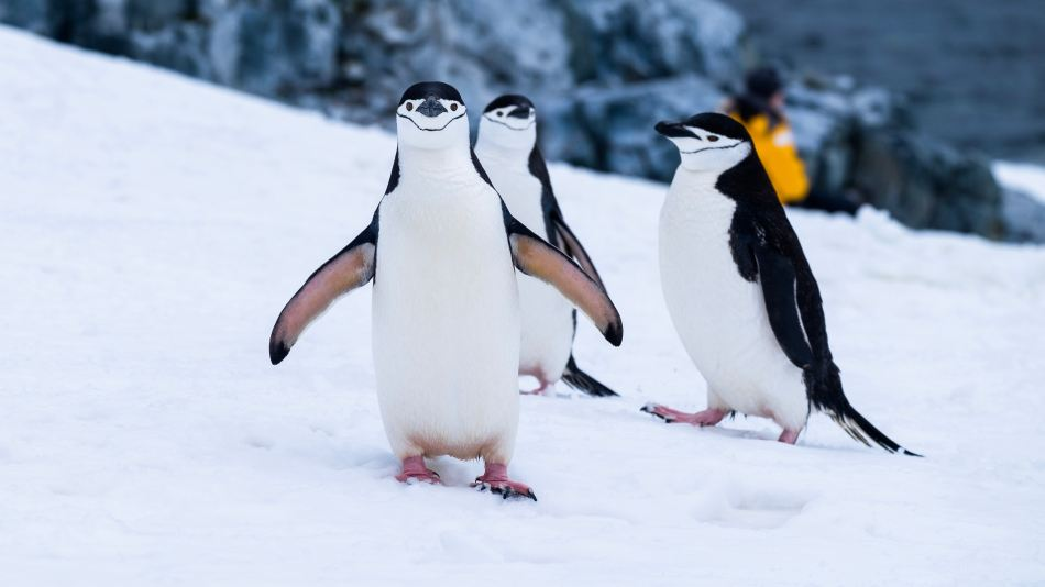 Penguins are smart