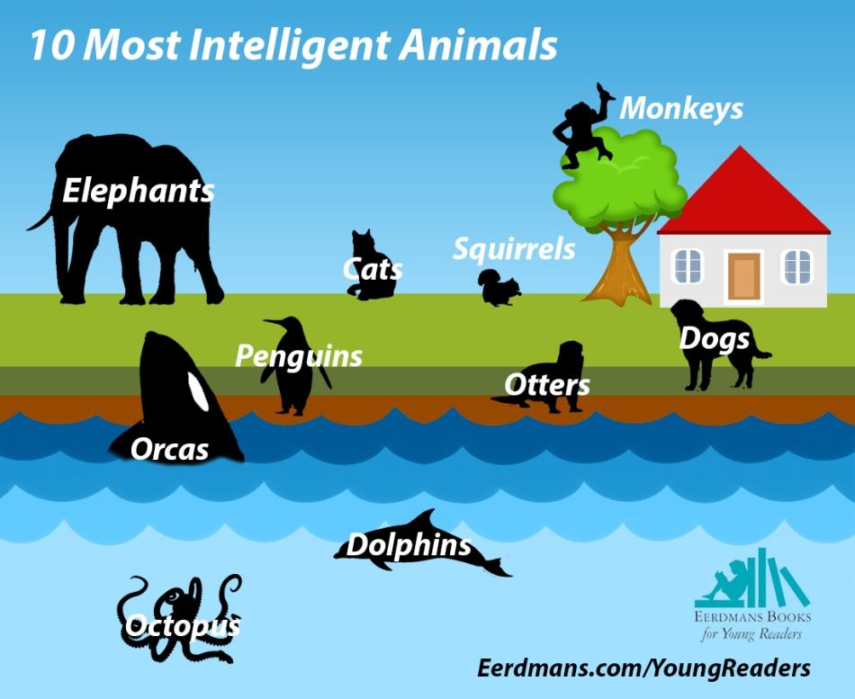 11 Most Intelligent Animals in the world