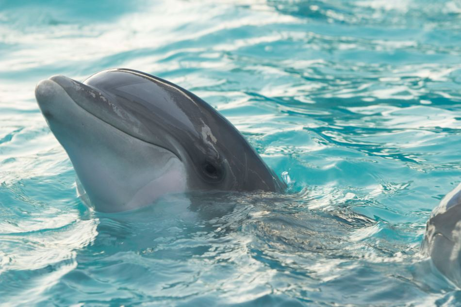 Dolphins are very smart mammals