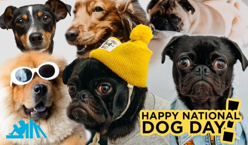 Happy National Dog Day kids books
